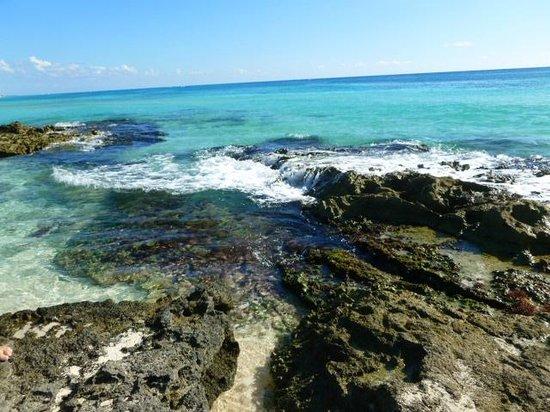 Sandos Playacar Beach Resort: Playa virgen a 10 cuadras del hotel