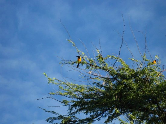 Tamarijn Aruba All Inclusive : Songbird that gently woke us