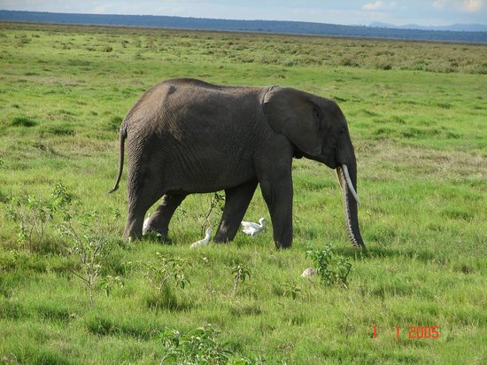 Amboseli National Park: Amboseli Park