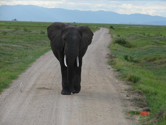 Amboseli National Park: Dont come in my way....