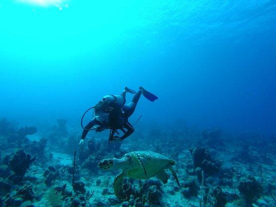 Club Med Turkoise, Turks & Caicos: Scuba