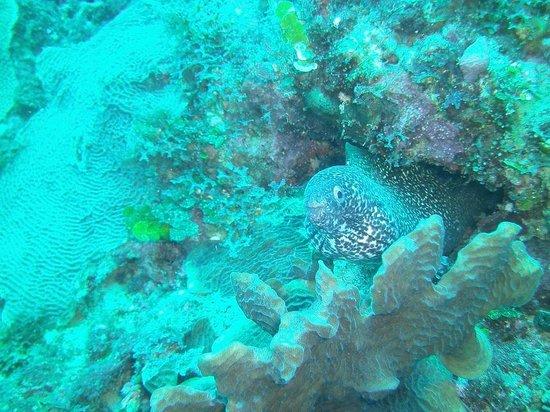 Caribbean Divers : Canion