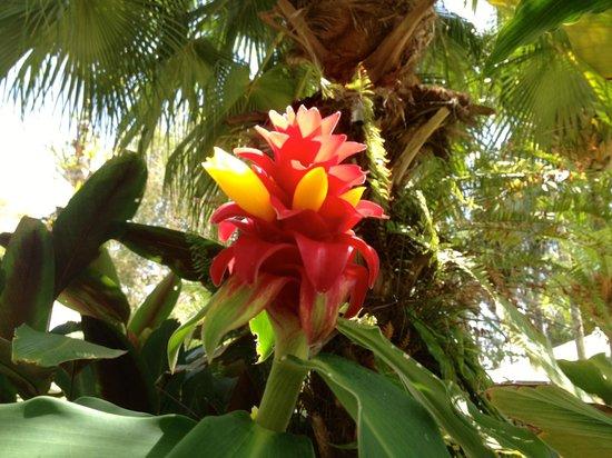 Melaleuca Resort: Grounds