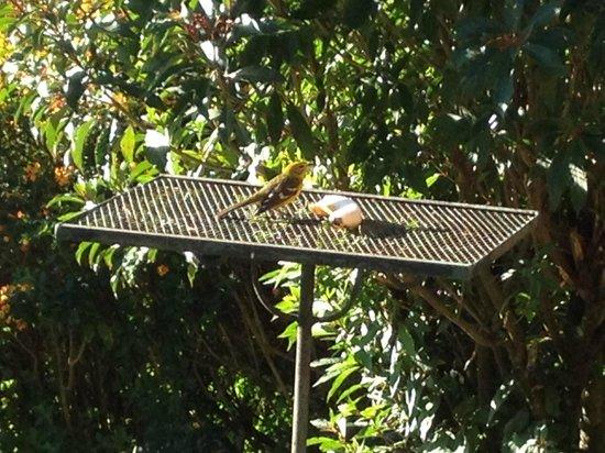 Finca Lerida : bird feeders outside restaurant