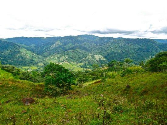 Jungle Adventures by Kalu Yala