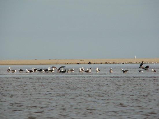 Excellence Turismo Day Tours: Avistamiento de aves