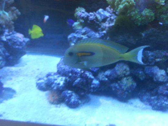 Best Western Plus Condado Palm Inn & Suites : Lobby Aquarium