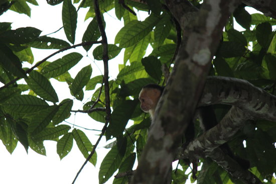 Villas de Oros : monkeys visiting