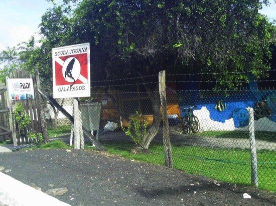 Scuba Iguana : Operadora de mergulho