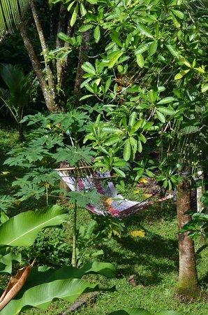 Vista Verde Guest House : garden