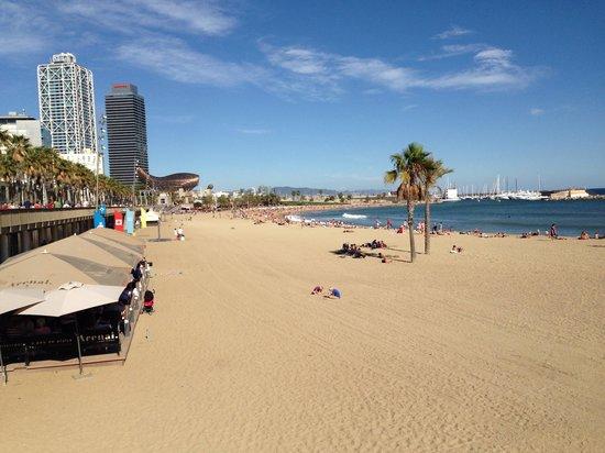 Barceloneta Suites : Strand
