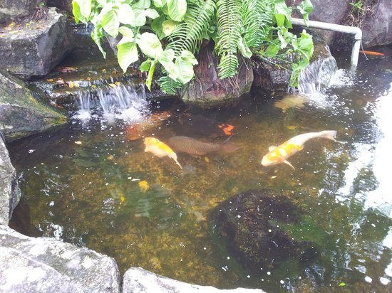 Concorde Inn Kuala Lumpur International Airport : Koi fish pond out the front
