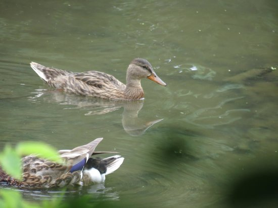 The Outdoor Campus: Duck at Outdoor Campus.