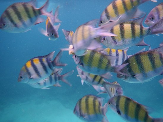 Phuket Sail Tours : Snorkelling amongst these colourful fish!