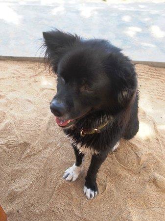 Fairmont Sanur Beach Bali: new dog friend
