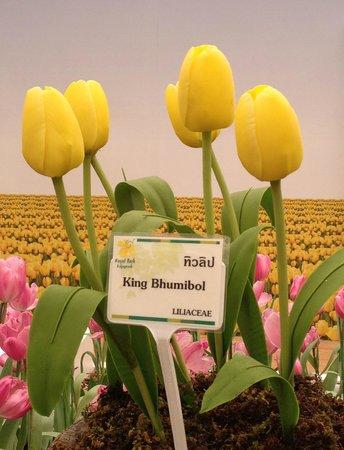 Royal Park Rajapruek: The King's Orchid
