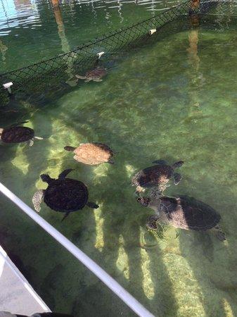The Turtle Hospital: Turtle