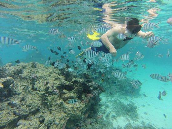 Snorkeling with fish picture of le meridien bora bora for Bora bora fish