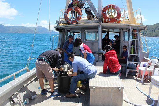 Havelock, New Zealand: hands-on on the boat