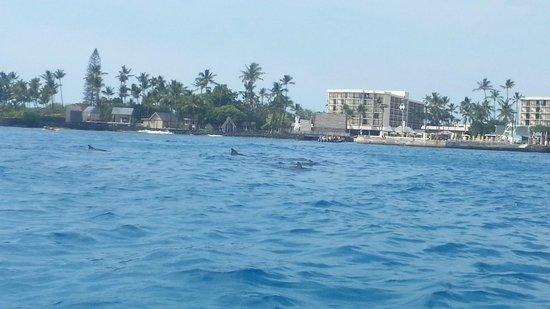 Kona Boys: Dolphins