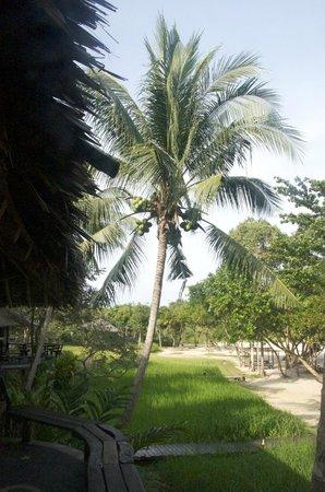 Koh Yao Yai Village : View from the beach bungalow