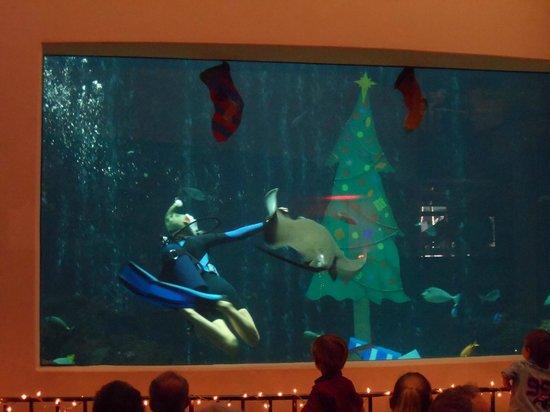 Oceanarium Restaurant : Diver show