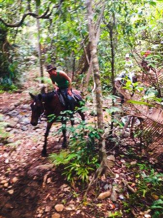 Cape Tribulation Horse Rides: Cape Tribulation Horse Ride - Daintree Rainforest