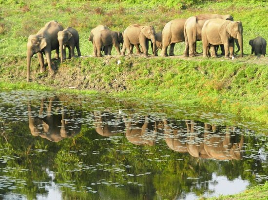 Chapramari Wild Life Sanctuary