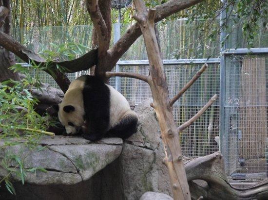 San Diego Zoo : 一頭しか居なかった