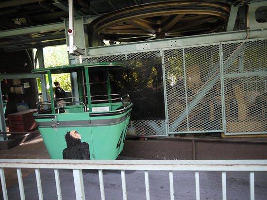 San Diego Zoo : ブラブラ揺れるロープウェー