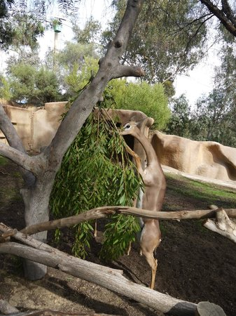 San Diego Zoo : 近い!