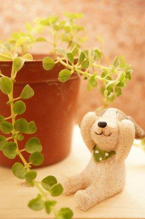 Summersummer Pension: 夏漁可愛的小植物
