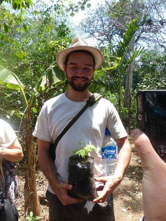 La Mariposa Spanish School and Eco Hotel: nicarguan national tree