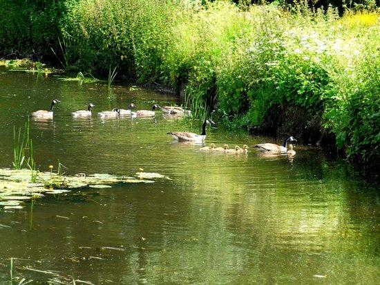 Fuller's Mill Garden: Wildlife.