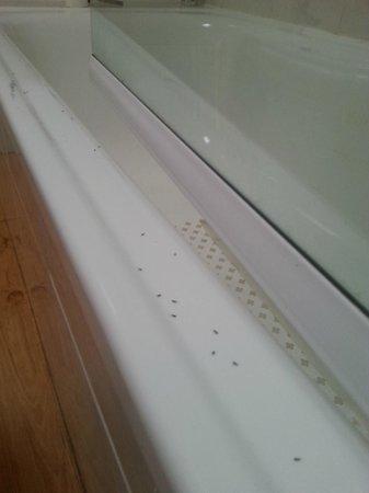 Costa Sal Villas and Suites: Ants in the bathroom!