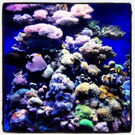 Underwater Observatory Marine Park: Fundo do mar