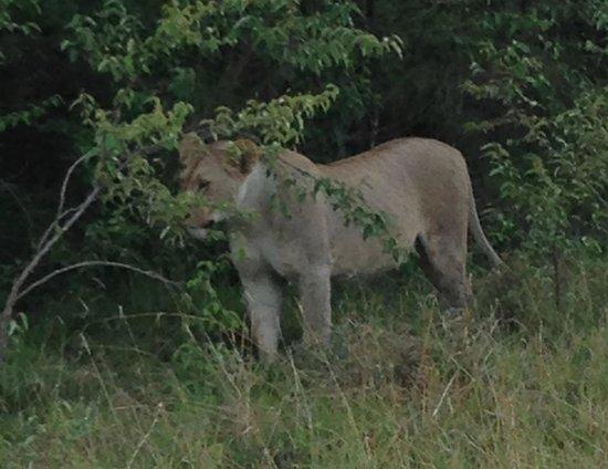 Mahali Mzuri - Sir Richard Branson's Kenyan Safari Camp: Up close and personal