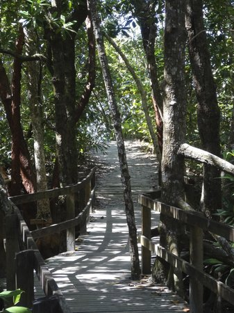 Cape Trib Camping: L'accès à la plage...