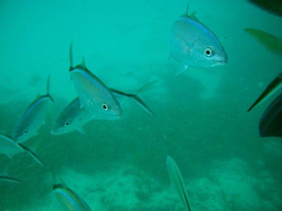 Dreams Palm Beach Punta Cana: Snorkeling