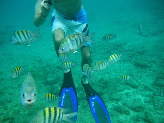 Grand Park Royal Cozumel : Snorkeling
