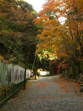 Hokoji Temple: Gorgeous autumn leaves