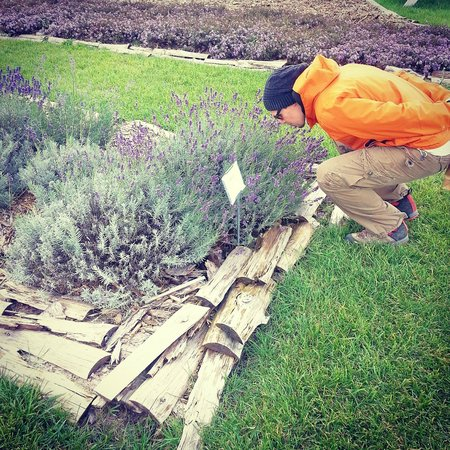 Light of Day Organics: Smelling the lavender.