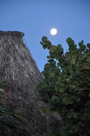 Luv Tulum: Morning Moon