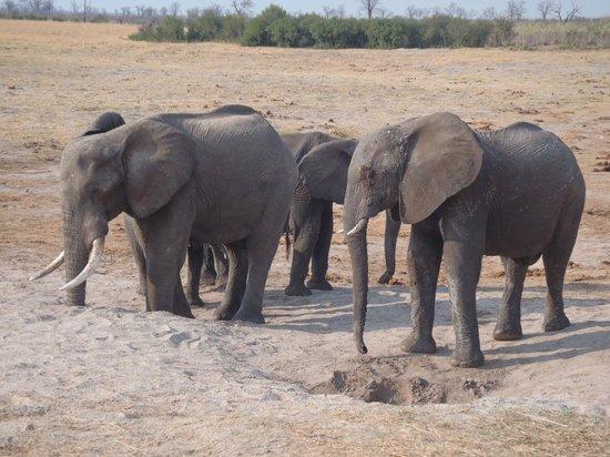 Nehimba Lodge: Elephant Drinking At Nehimba