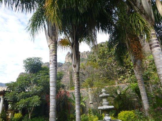 La Buena Vibra Retreat & Spa : Jardín
