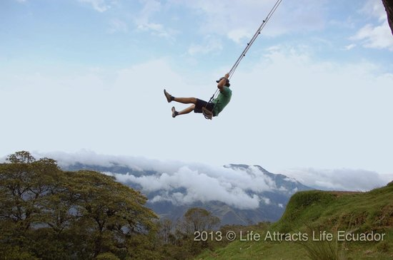 Casa Del Arbol : Swing