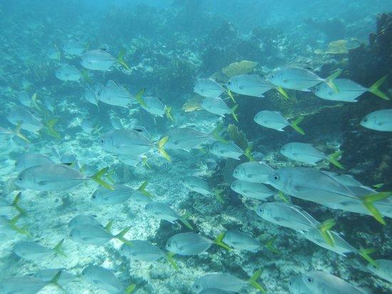 Sea Sports Belize : school of fish