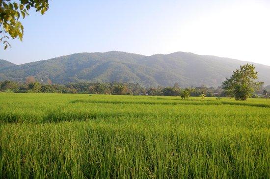 Doi Mae Salong : Ride to Salong