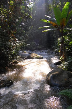 Khun Korn Waterfall: Hike through the jungle