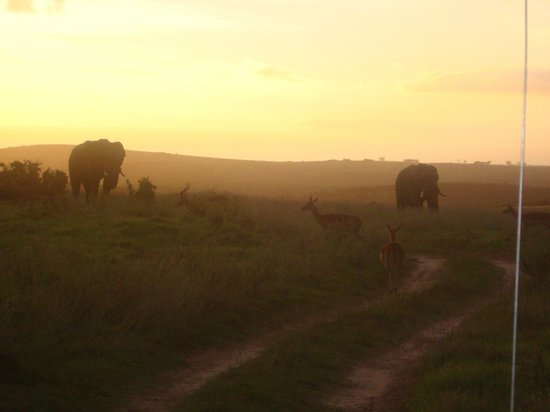 Idwala Game Lodge : Sunset Ellies